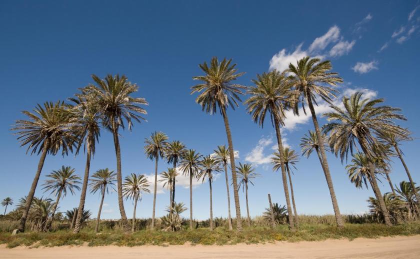 Los DolsesMedvilla Spanje